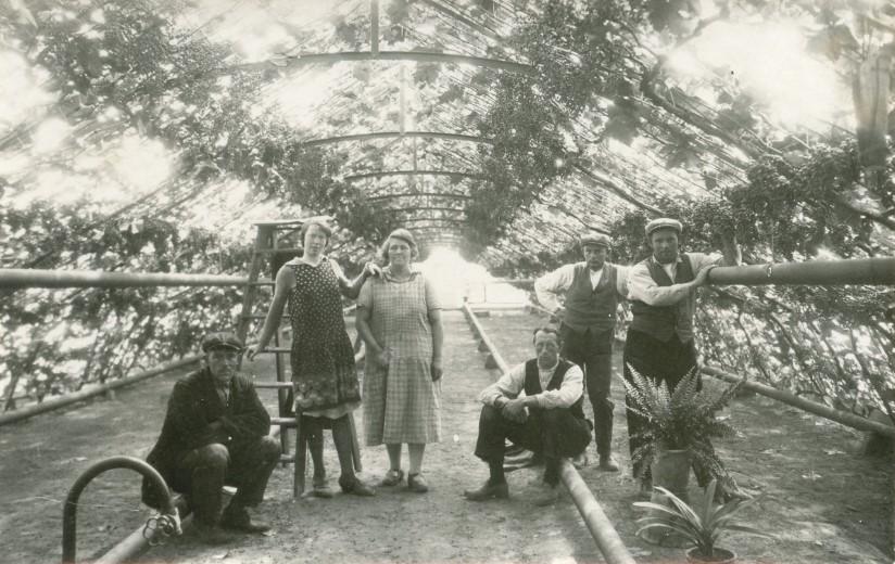 Kamerplanten in een druivenkas
