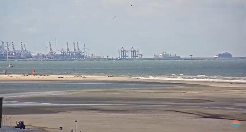 Drenkeling Maasvlakte sprong van cruiseschip
