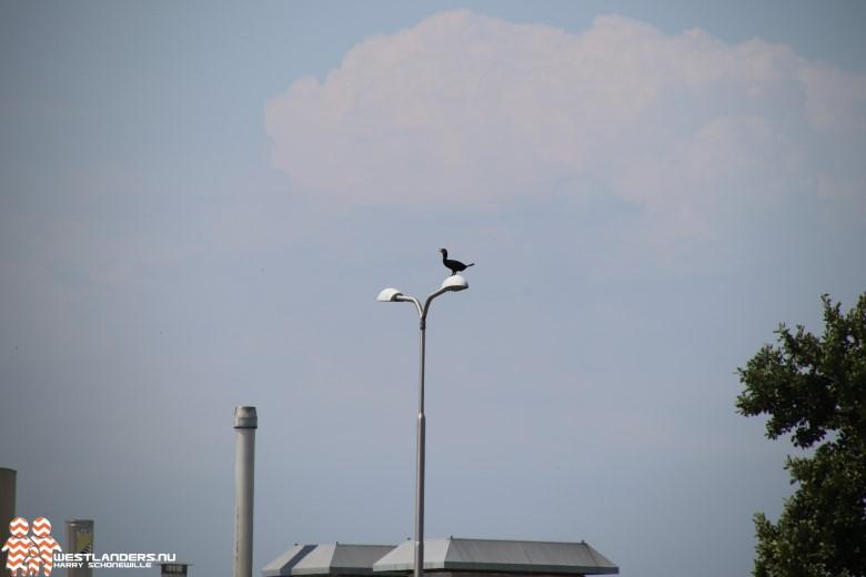 Vrijdag kans op smog door ozon