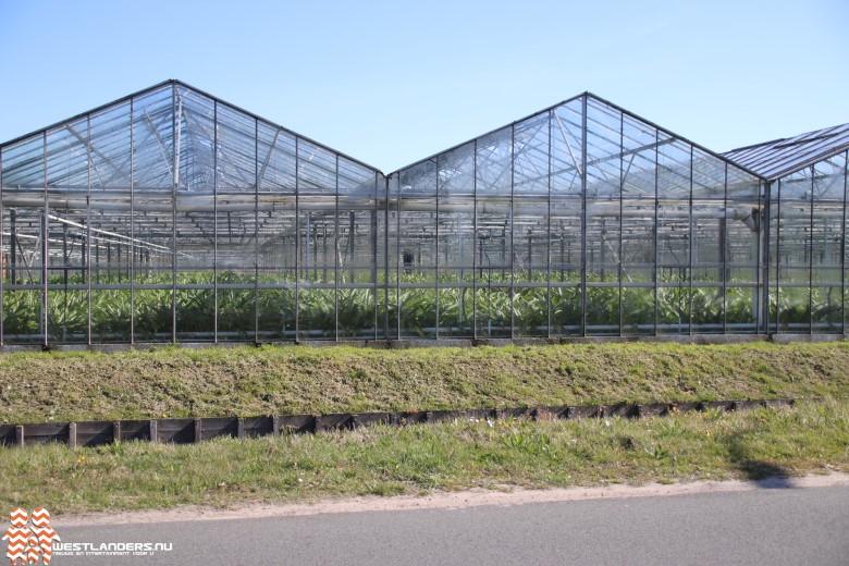 € 40.000 voor onderzoek naar ander gebruik gewassen in tuinbouw