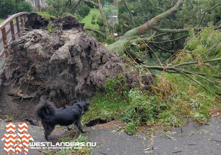 Opnieuw stormschademeldingen in de regio