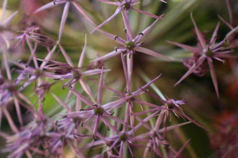 De Kracht van Planten door Jos Malherbe