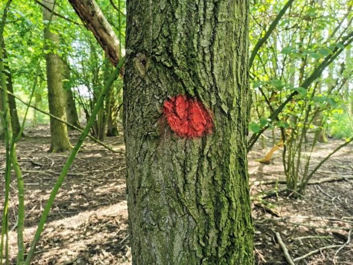 Start boswerkzaamheden aan de Zuidbuurt in juli