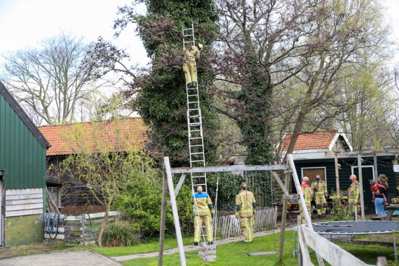 Kat in de boom houdt brandweer bezig