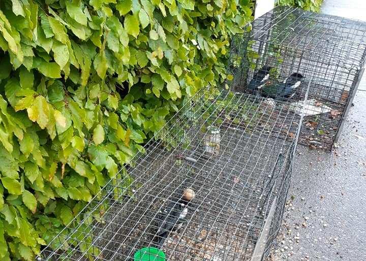 Wilde vogels vrijgelaten door dierenpolitie