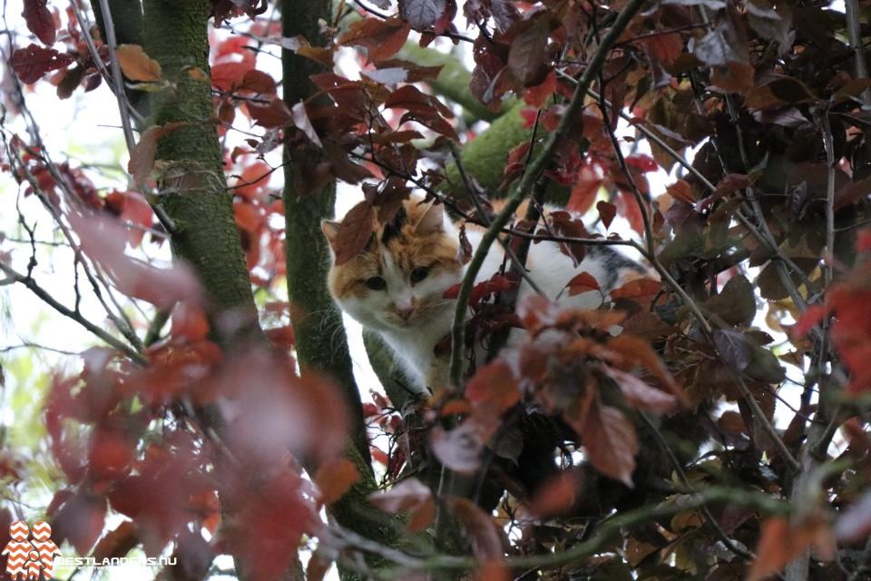 Een kat in het nauw...