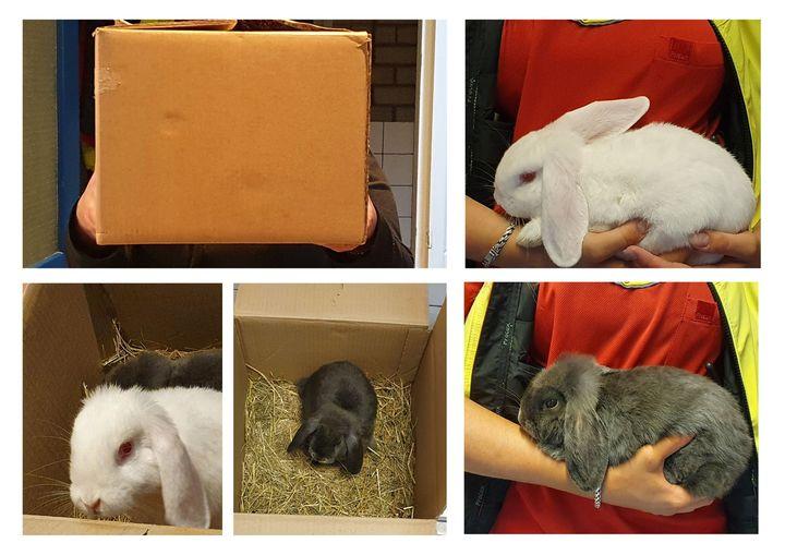 Jonge konijnen gedumpt in buitengebied