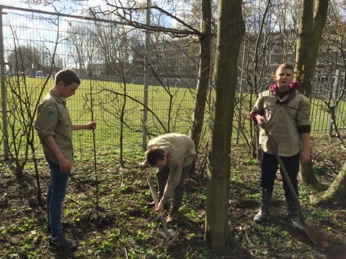 Scouts steken handen uit de mouwen op eigen Boomplantdag