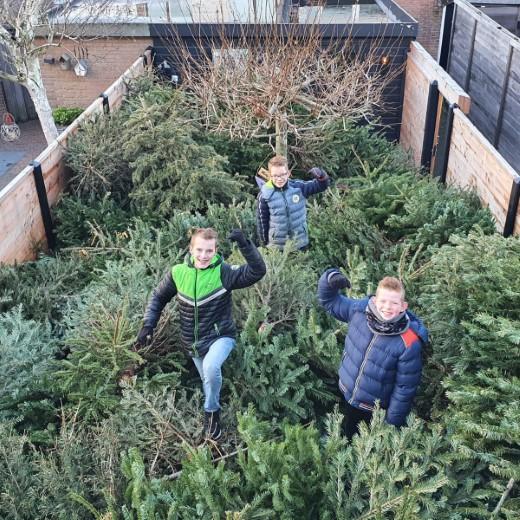 Flinke kerstbomen inzameling in Naaldwijk