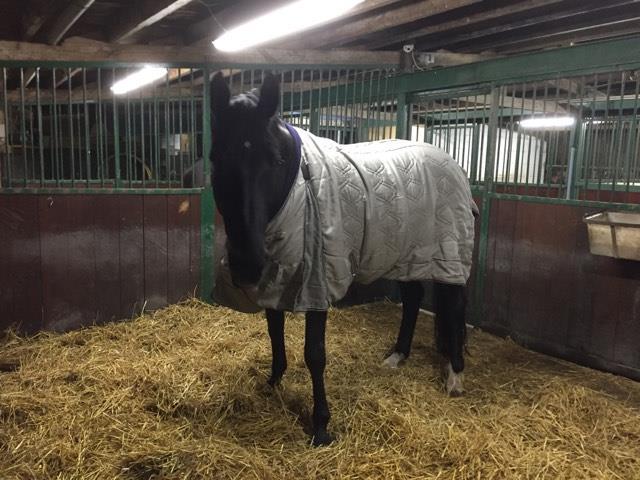 Twee gevallen van paardenziekte Droes