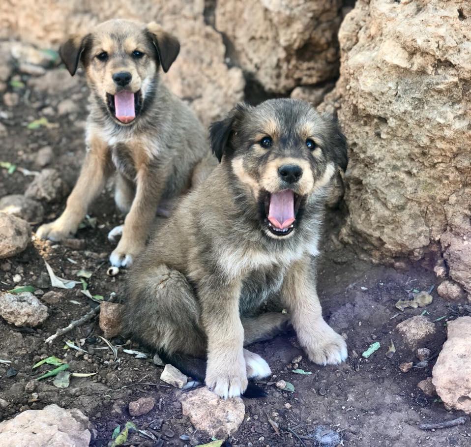 Sponsorwandeling Stichting Hondenzorg en Welzijn in De Lier