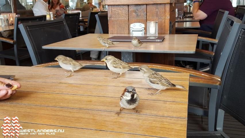 Toename vogelsterfte door droogte