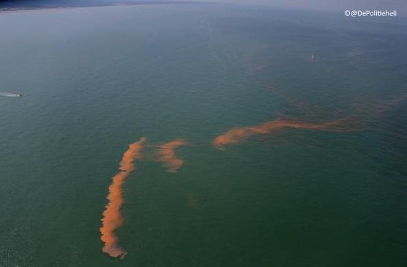 Noctiluca Scintillans waarschijnlijk veroorzaker verkleurd zeewater