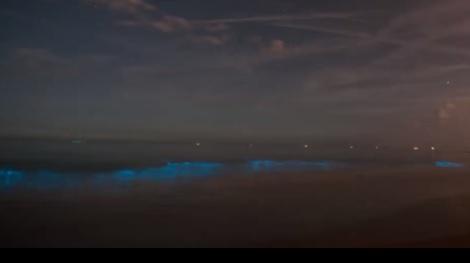 Negatief zwemadvies voor zeewater in Scheveningen, Wassenaar en Katwijk