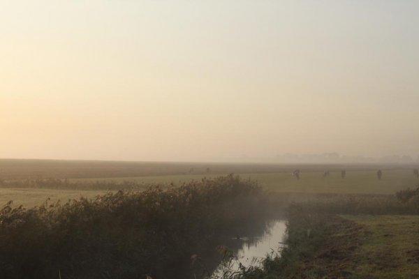 Miljoen euro voor veenweidelandschap Midden-Delfland